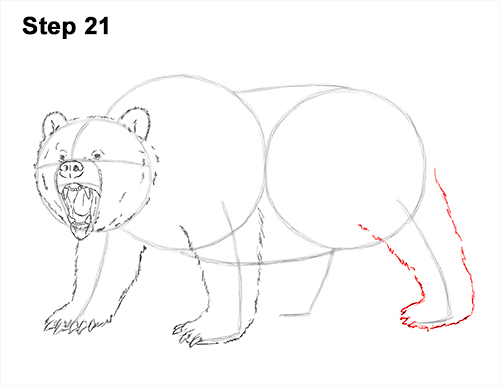 500x386 How to Draw a Grizzly Bear (Growling)