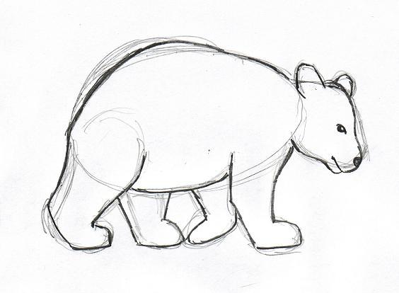 564x414 Bear Drawing