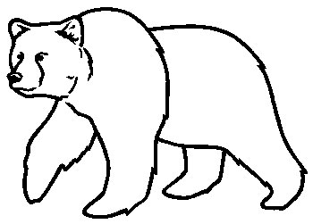 350x251 Bear Drawing Pictures (Good Galleries) Burning Patterns