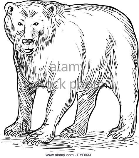 473x540 Bear Drawing Stock Photos Amp Bear Drawing Stock Images