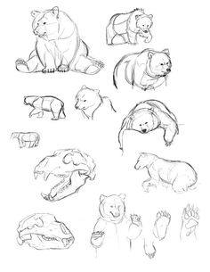 236x305 Bear Sketches