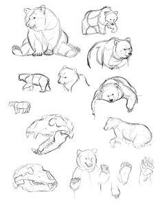236x305 Bear Sketches