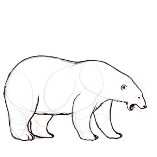 500x500 Best Photos Of Polar Bear Outline