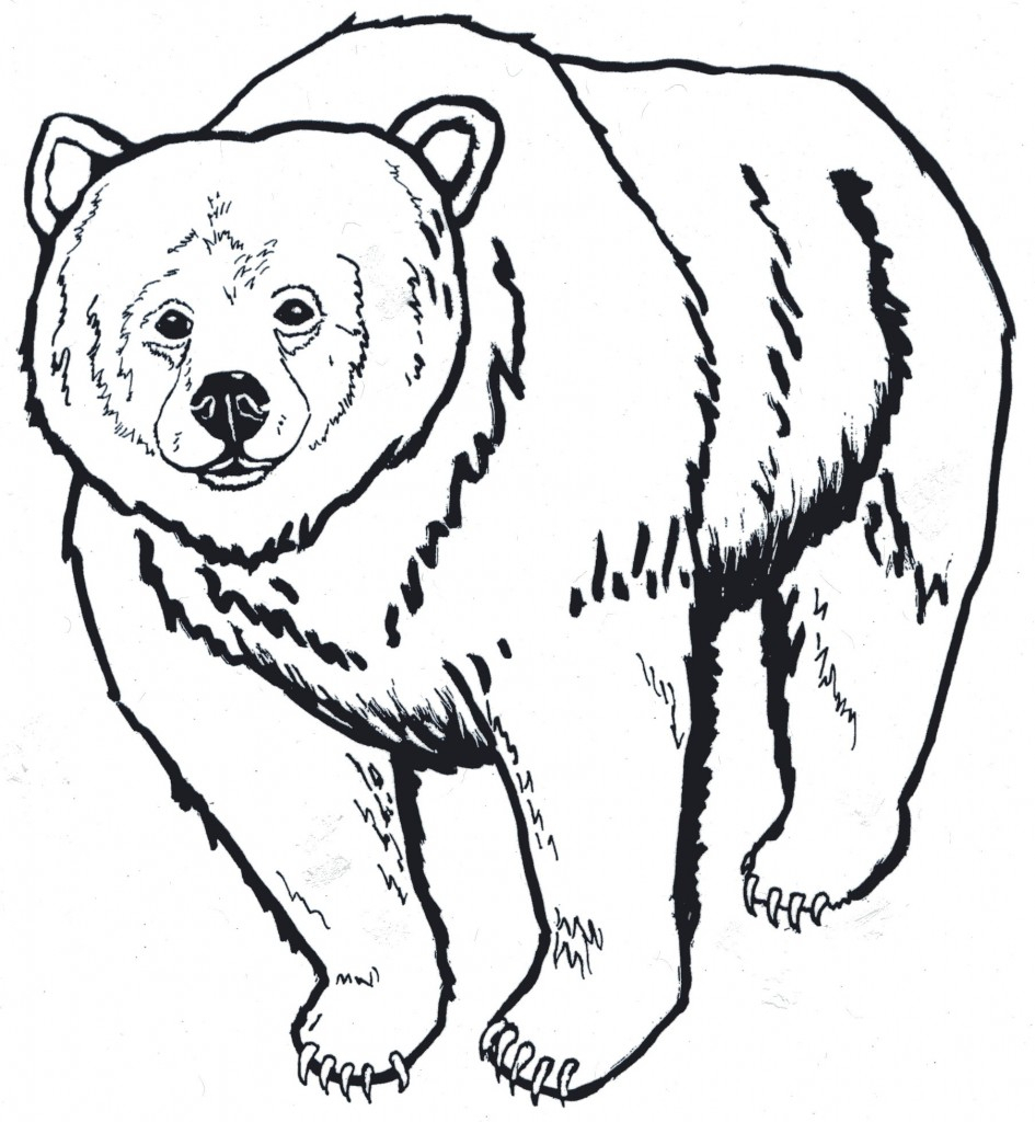 945x1024 Polar Bear Outline Drawing Bear Outline With Polar Bear Outline