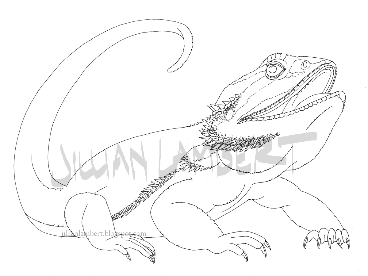 1200x900 Bearded Dragon Drawing Brain Drain Art And Sketchesjillian Lambert