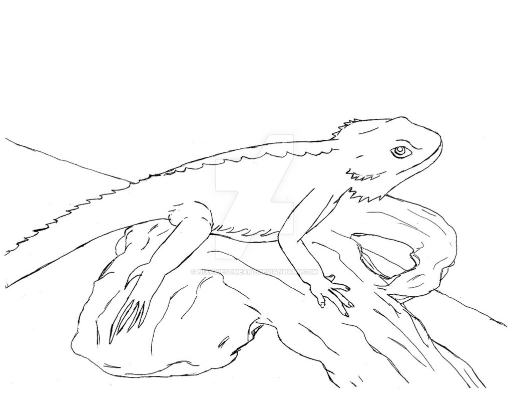 1017x786 Bearded Dragon By Nixawesomeart