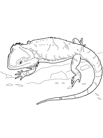 360x480 Bearded Dragon Coloring Page Free Printable Coloring Pages