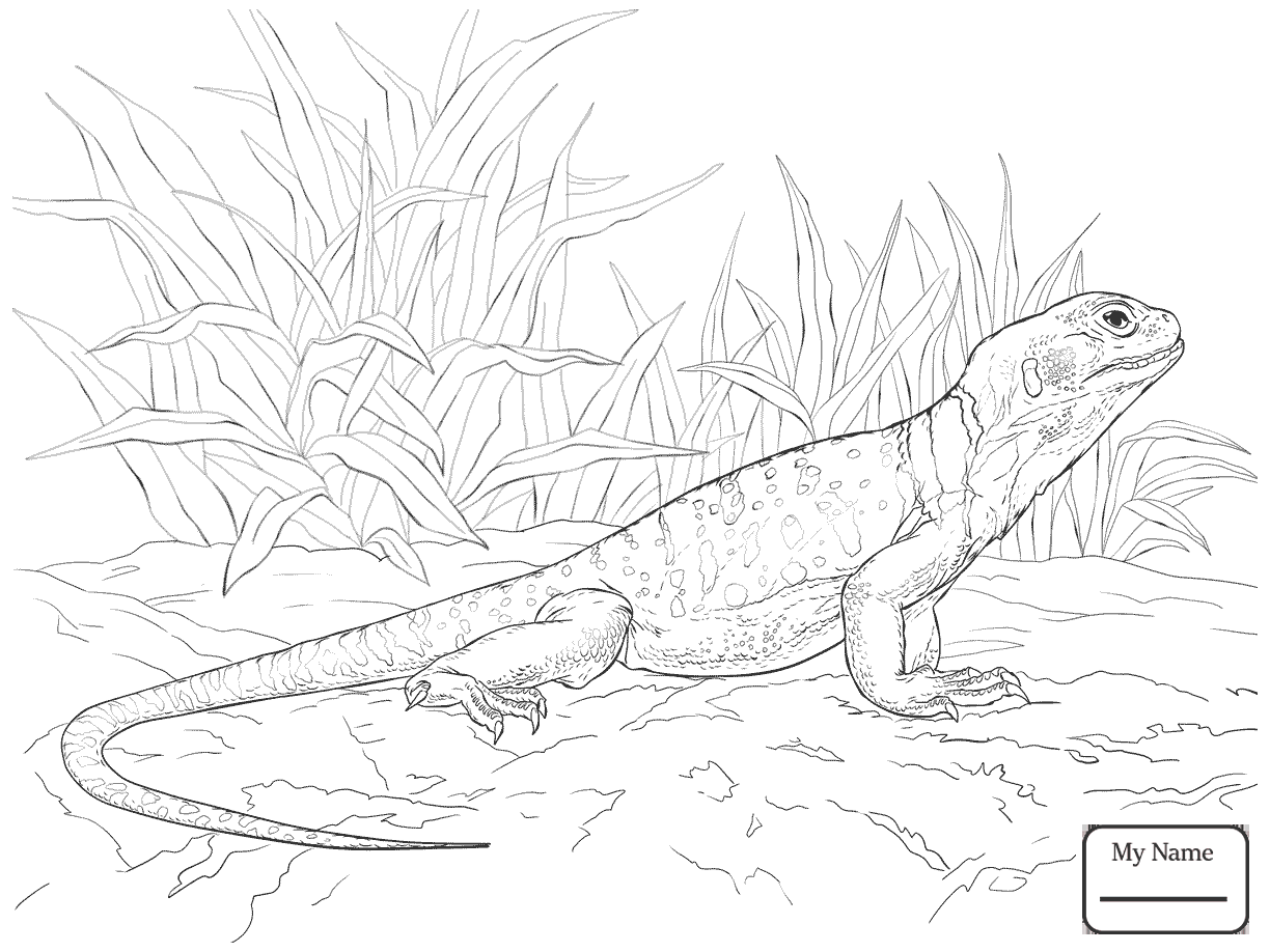 1224x918 Central Bearded Dragon Lizards Reptiles Lizards Coloring Pages