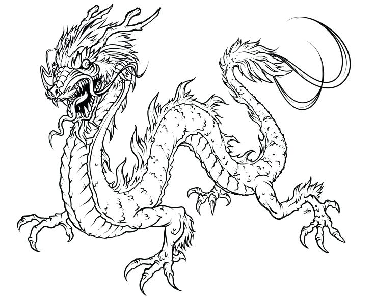 736x588 Elegant Bearded Dragon Coloring Pages For Dragon Coloring Pages