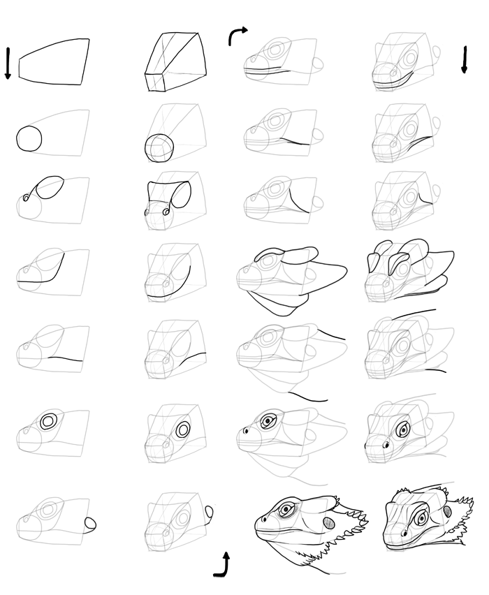 700x852 How To Draw Lizards (Aka Real Life Dragons)