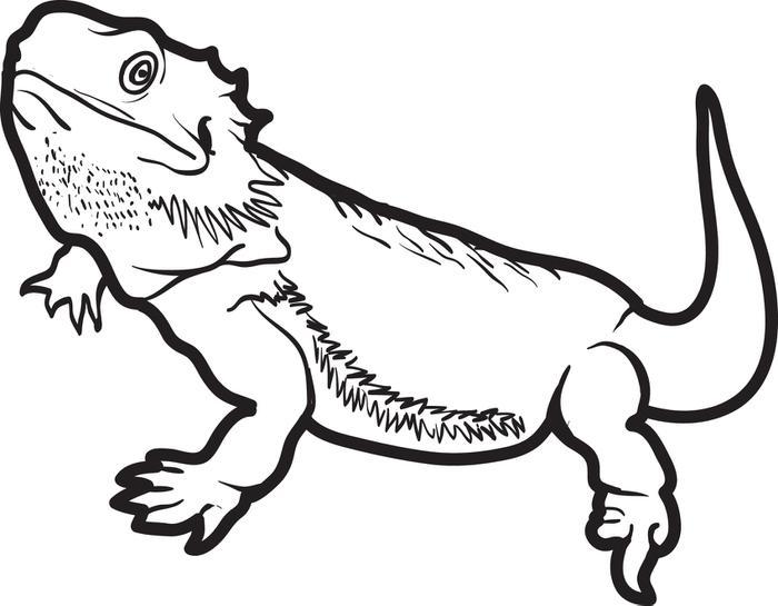 700x545 Bearded Dragon Coloring Pages Coloring Page For Kids