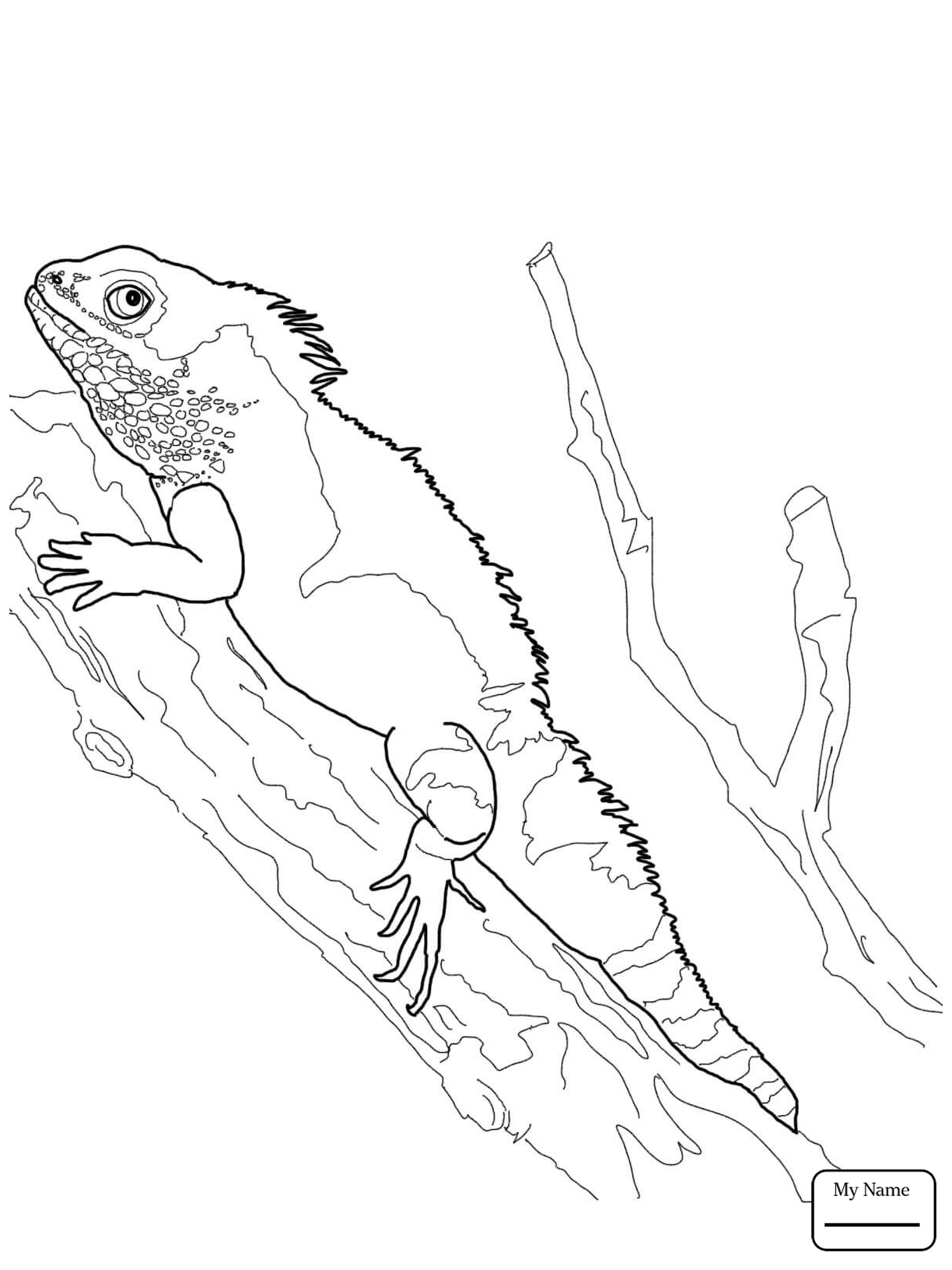 1224x1632 Coloring Pages Bearded Dragon Reptiles