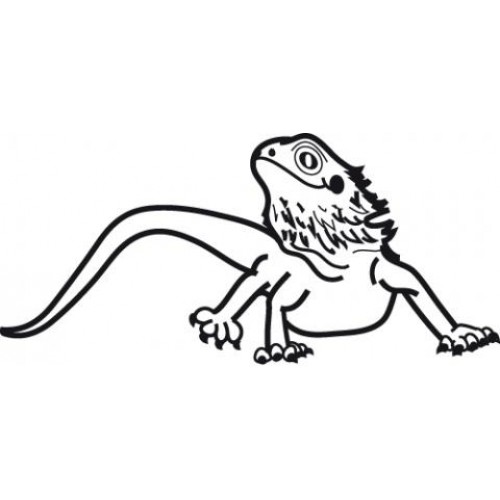500x500 Bearded Dragon Car Window Vinyl Decal