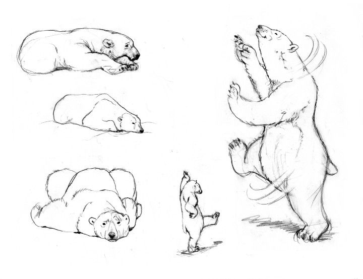 Bears Drawing