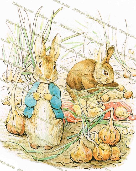 570x713 Peter Rabbit Nursery Decor Beatrix Potterrt Prints Rock