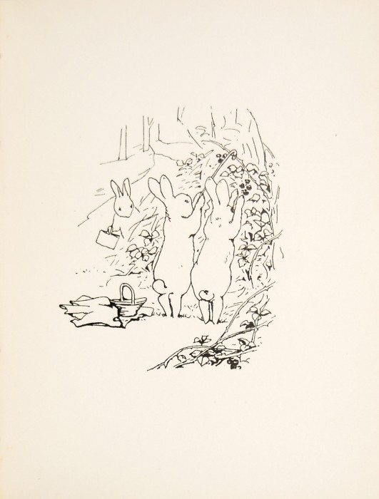 531x700 The Tale Of Peter Rabbit By Beatrix Potter. First Edition