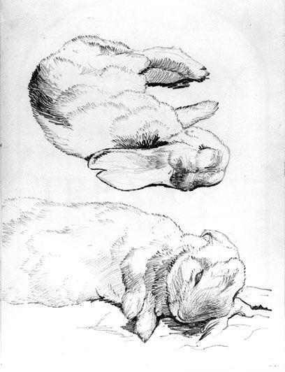 408x532 Beatrix Potter Art Amp Illustrations Drawings