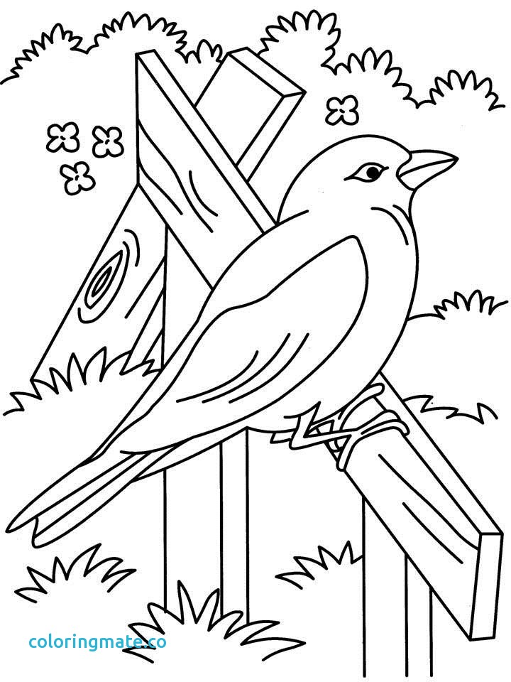 720x960 Beautiful Coloring Pages Best Beautiful Bird Coloring Page