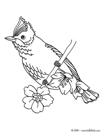 363x470 Beautiful Bird Coloring Page. Nice Bird Coloring Sheet. More