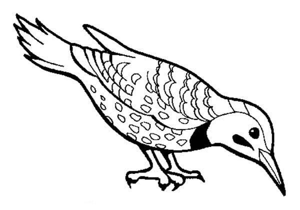 600x419 Beautiful Bird Find Seed To Eat Coloring Page Color Luna