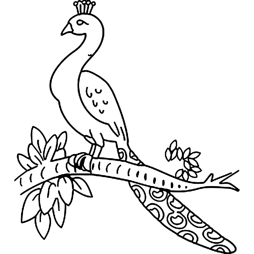 1050x1050 Beautiful Bird Peacock Coloring Pages