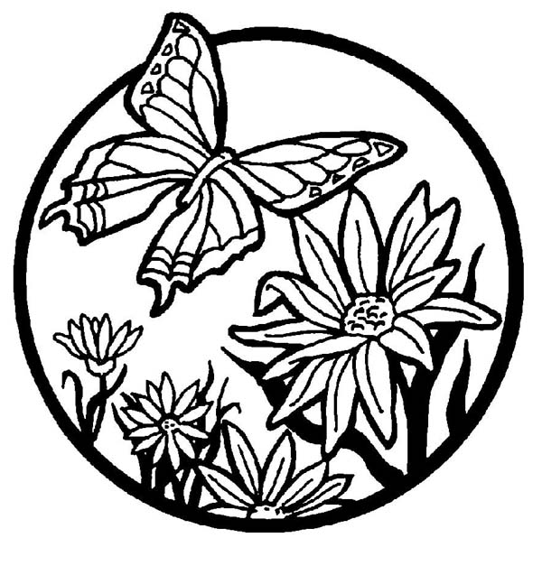 600x627 Beautiful Butterfly Illustration Coloring Page Beautiful