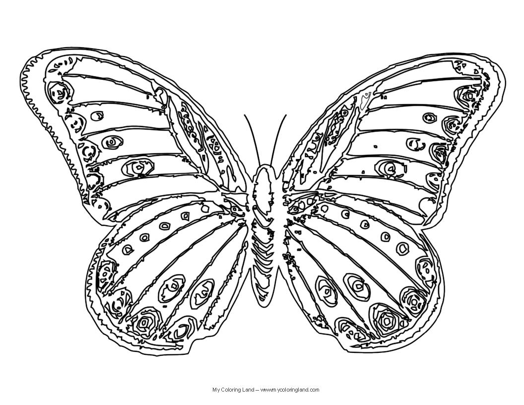1056x816 Beautiful Sketch Of Butterfly Beautiful Butterfly Drawing