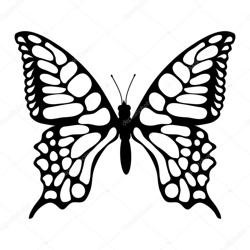 1024x1024 Beautiful Butterfly Illustration Stock Vector Korniakovstock