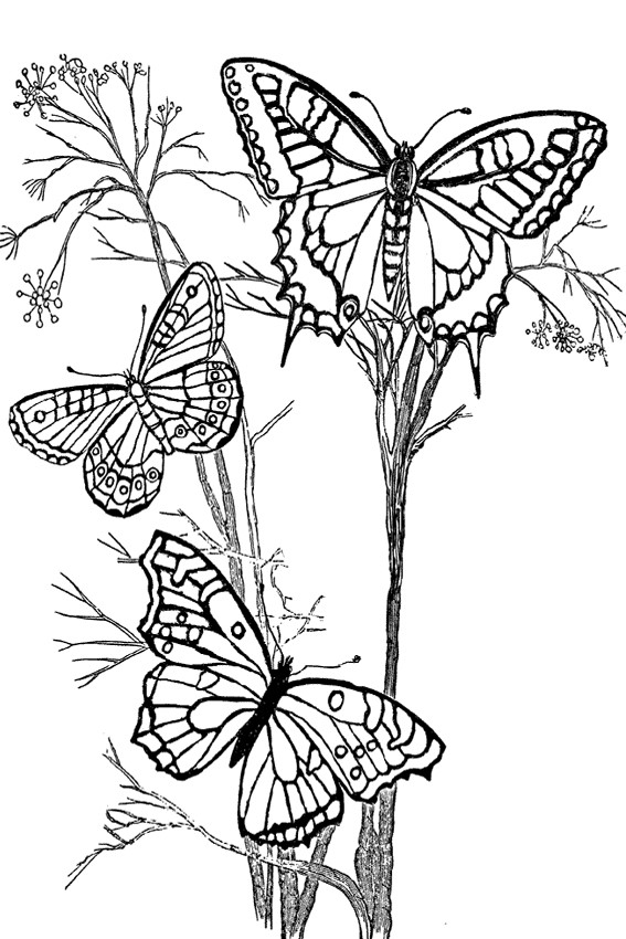 567x850 List Of Beautiful Caterpillar And Butterfly Coloring Pages