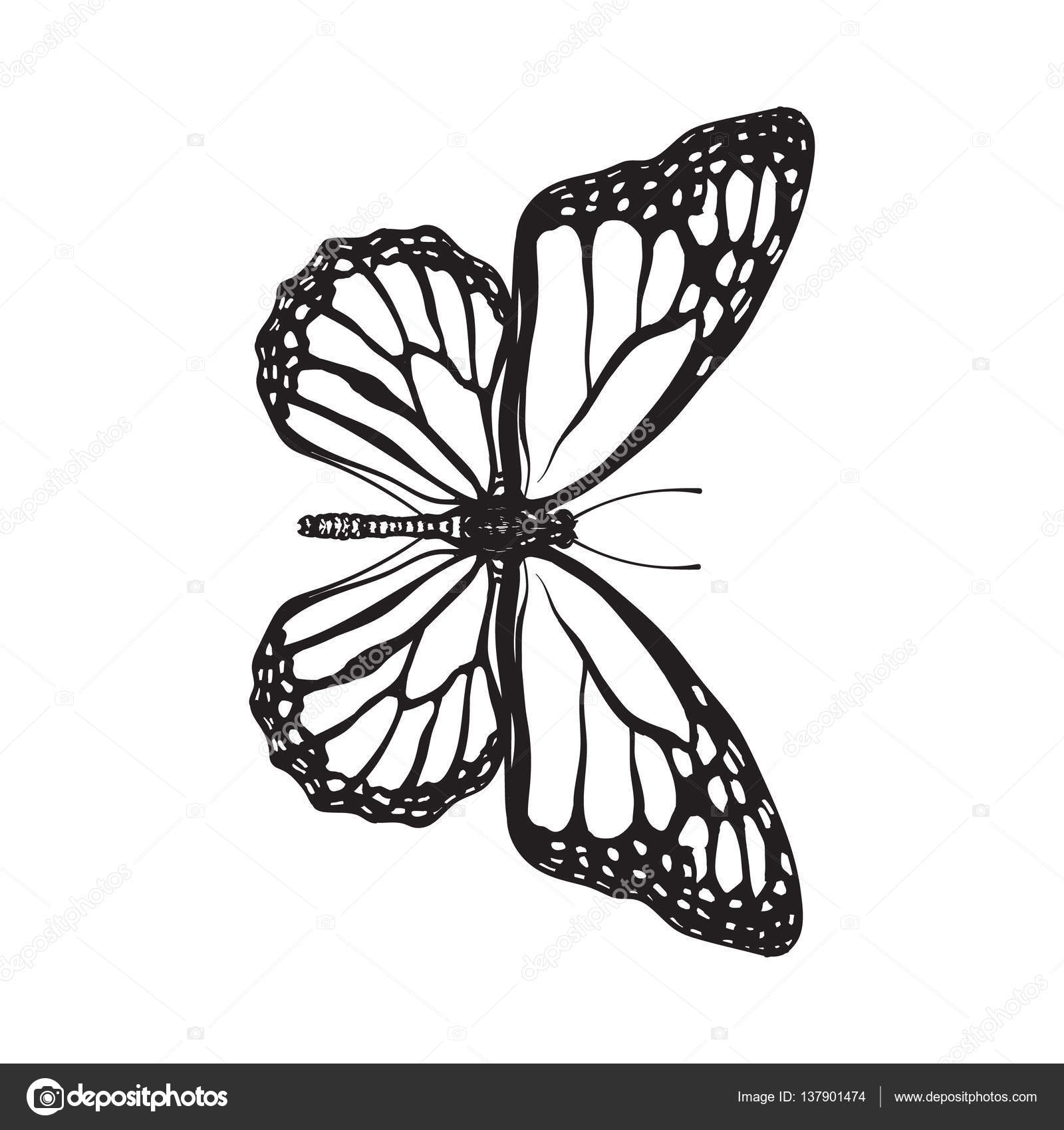 1600x1700 Top View Of Beautiful Monarch Butterfly, Isolated Sketch Style