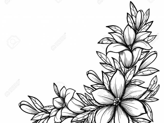 640x480 Beautiful Drawings Of Flowers