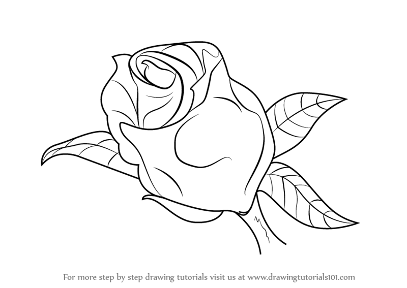 800x567 Learn How To Draw A Beautiful Rose (Rose) Step By Step Drawing