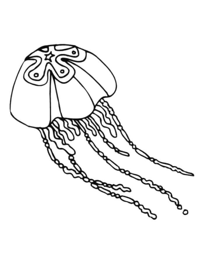 700x905 Most Beautiful Jelly Fish Drawing Ideas Wonderful Design