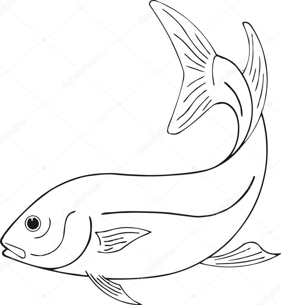 942x1023 Beautiful Fish Vector Stock Vector Princessart