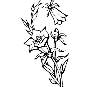 300x300 Drawn Lily