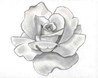 320x254 Rose Flower Drawing Wallpapers Beautiful Flowers Wallpapers