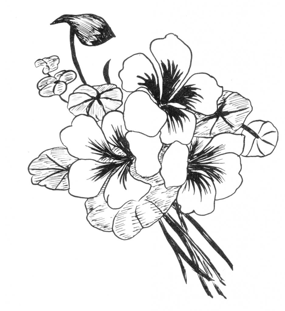 938x1024 Simple Beautiful Flower Drawing Beautiful Flower Drawing Photos