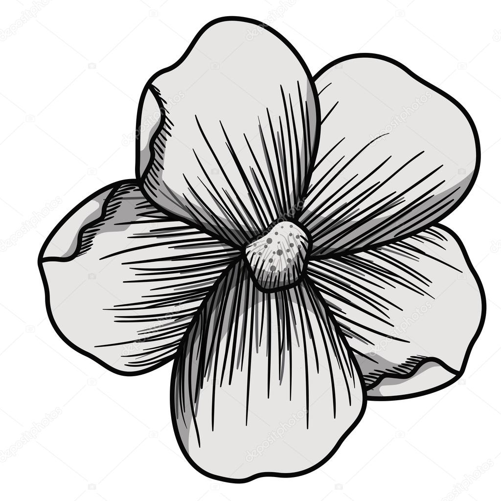 1024x1024 Beautiful Flower Drawing Isolated Stock Vector Grgroupstock
