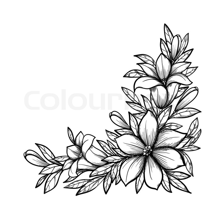 800x771 Beautiful Black And White Branch With Flowers. Drawn In Graphical