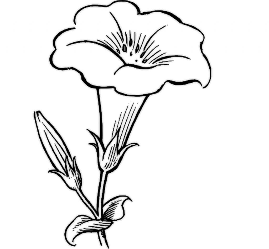 1024x948 Beautiful Flowers Drawing Step By Step