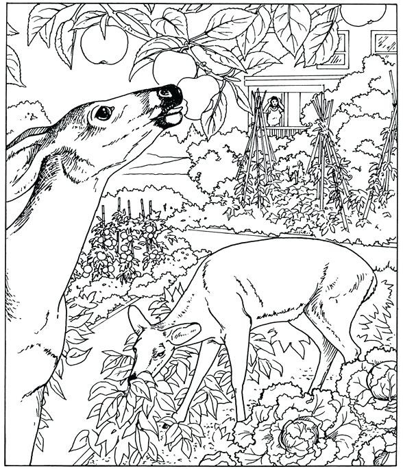 588x684 Delivered Nature Coloring Pages To Print Beautiful Scenery 71