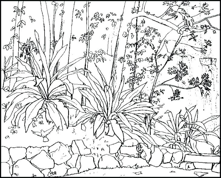 730x589 Nature Coloring Page Beautiful Nature In Spring Coloring Page Free