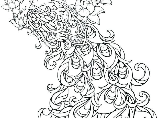 618x464 Peacock Coloring Coloring Peacock Media
