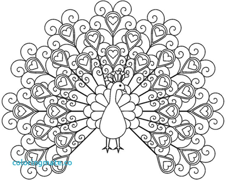 736x588 Peacock Coloring Page Beautiful Beautiful Peacock Coloring Pages