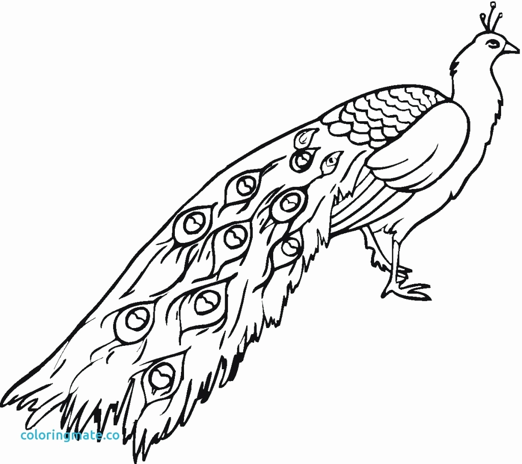 1024x911 Peacock Coloring Page Beautiful Peacock Coloring Pages Peacock