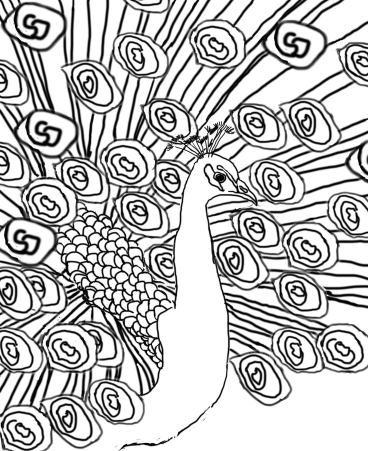 736x902 The Best Peacock Sketch Ideas On Peacock Drawing
