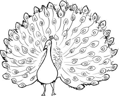 400x323 Ultimate Coloring Pages Of Peacocks Beautiful Peacock Page 51