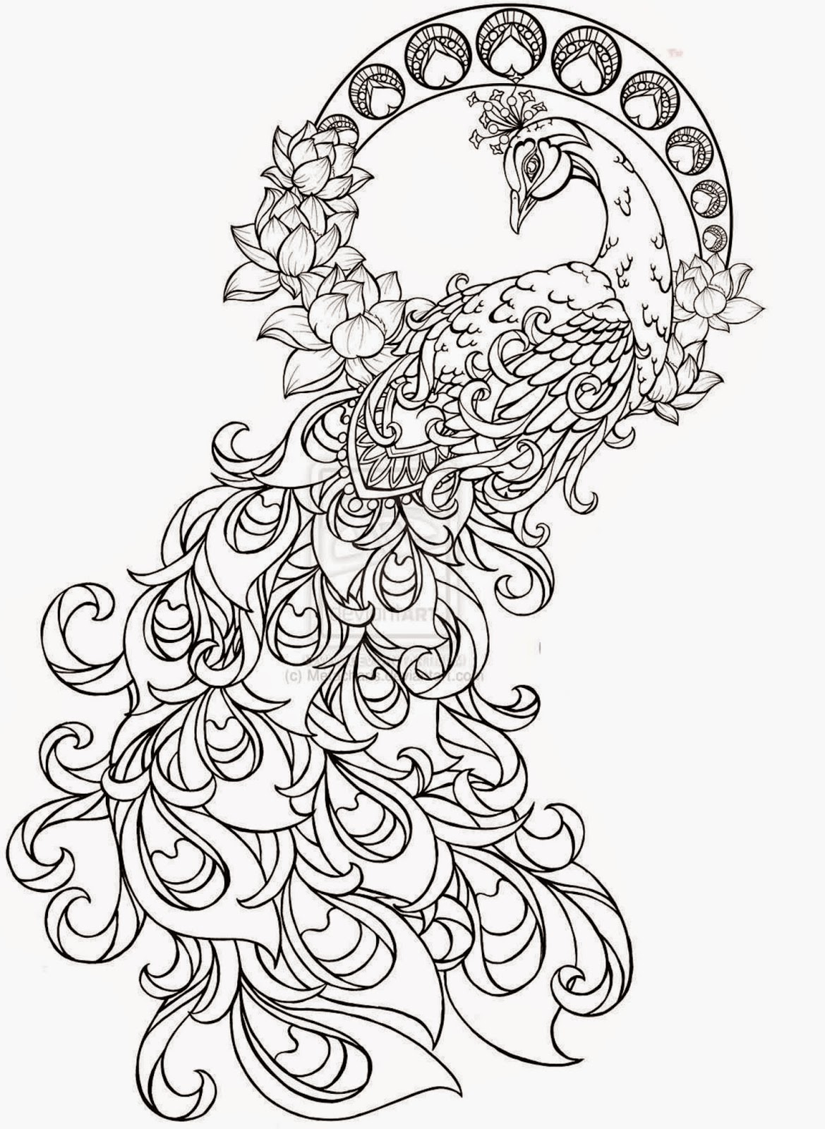1169x1600 Colours Drawing Wallpaper Simple Drawing Of Green Peacock Its Kid