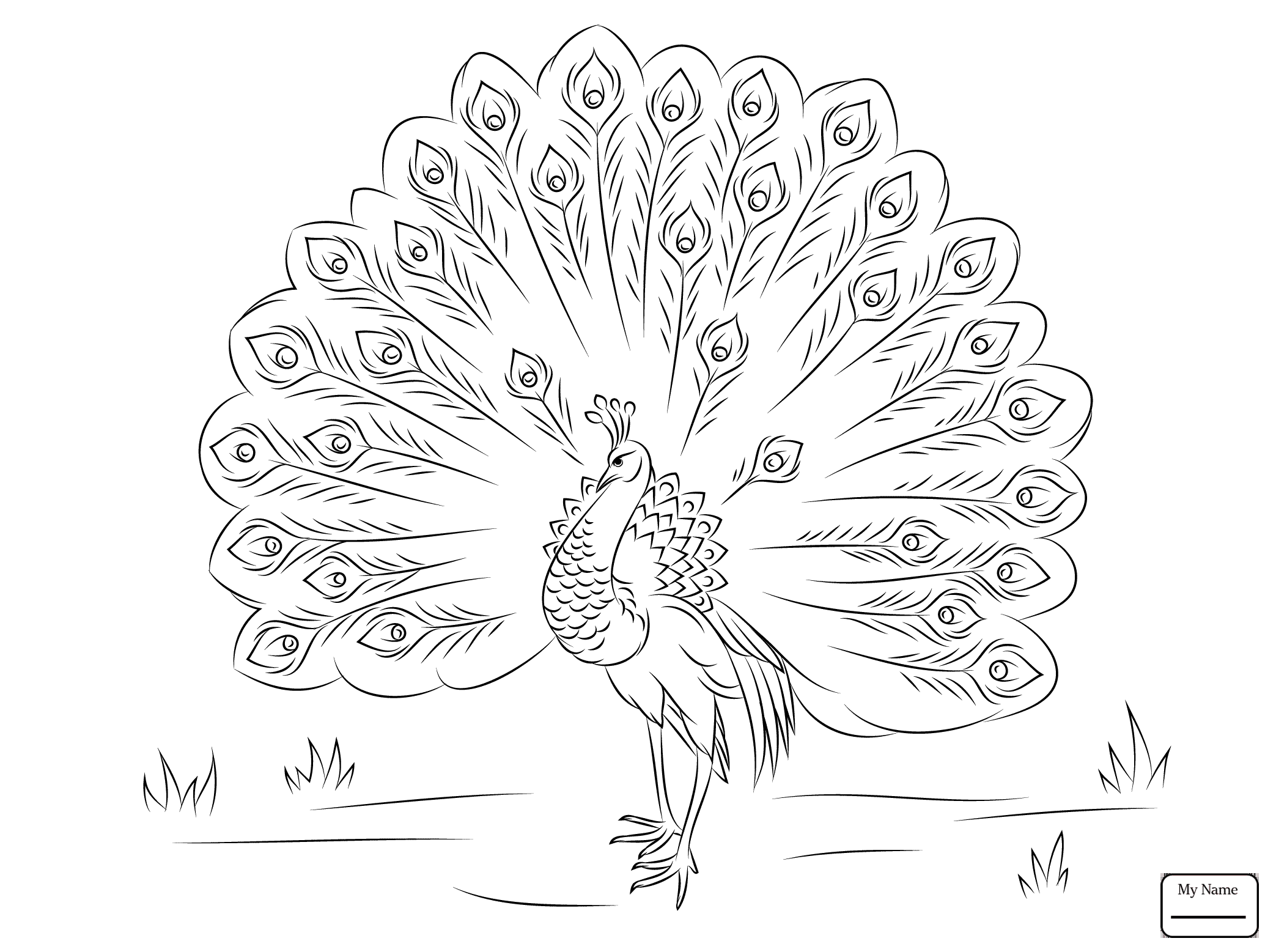 2087x1557 Beautiful Peacock Birds Peacocks Coloring Pages For Kids