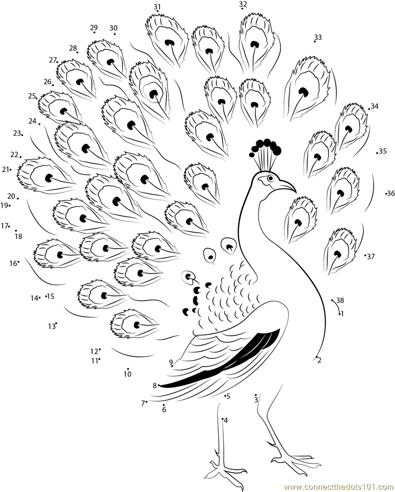 800x998 Beautiful Peacock Dot To Dot Printable Worksheet
